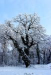 Winter 2009 III by gold-rose