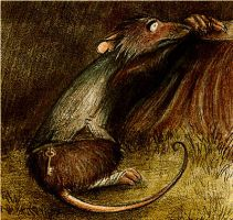 Poor Rat by Skia