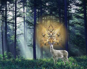 Hungarian White Stag