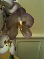 Fondant Orchid Close Up by Spudnuts