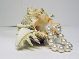Conch Shell with Pearls Stock1 by D-is-for-Duck