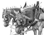 Draft Horse Hitch by staceyfineart