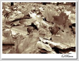 leafs by raven30hell