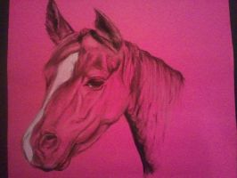 Pink Horse 2 by danebrown