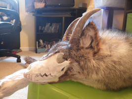 Horns by TabbyFoxTaxidermy