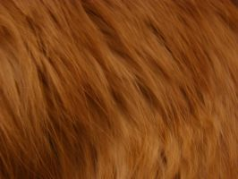 Fur texture 2 by AnnFrost-stock