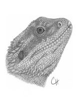 Bearded Dragon by Reptile35