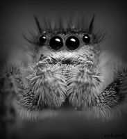 Jumper Mugshot in BW by Enkased