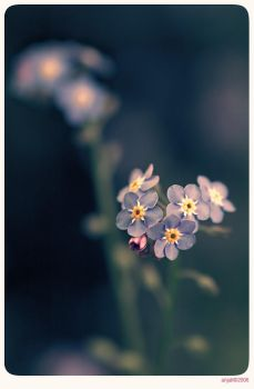 Forget me not - 11 by anjali