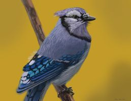 blue jay painting by nosoart