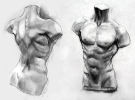 Male Torso Study by yolque