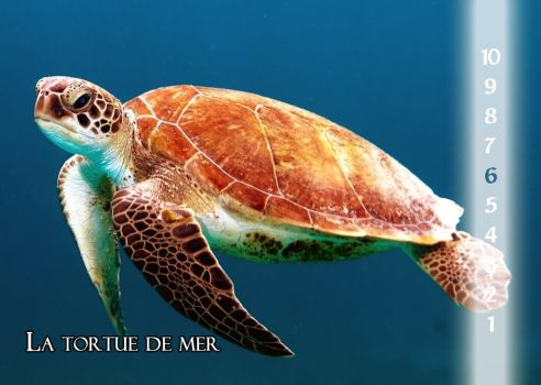 18_The Sea Turtle by Varagh