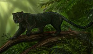 Bagheera Prowls by Moolallingtons