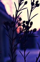 Crepuscule. by Life-in-plastic