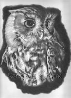 Owl by Karentownsend