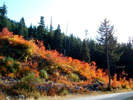 splashes of October by rapidograph
