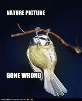 nature photo gone wrong... by Bon243