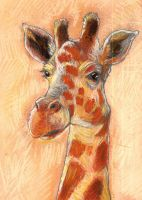 giraffe by xedgerx