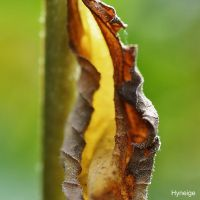 Cocon d'automne. by hyneige