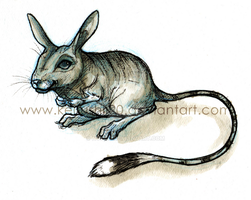 Scooter the Jerboa by NYX-34