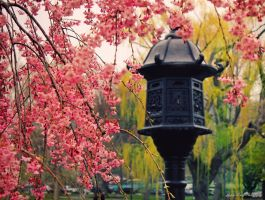 Just a MeMory of Spring V by MyLifeThroughTheLens