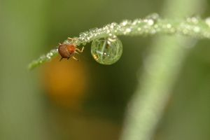 Aphid crystal ball by troypiggo