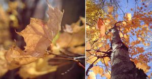 diptych4 by ram-photography