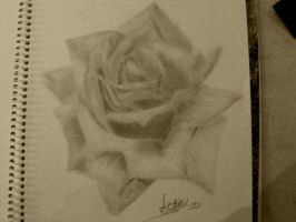 Rose by austate