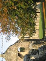 Fountains Abbey Tree by Duamuteffe