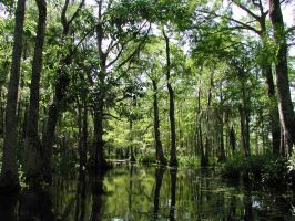 New Orleans Swamps by dreameater