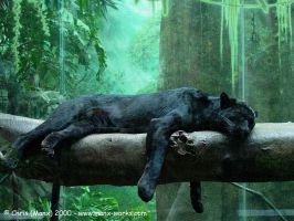 Black Jaguar by Manx-Works