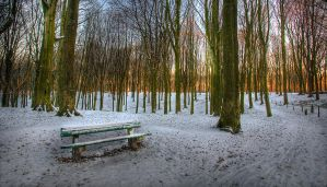 some rest in the forest by sm00keh