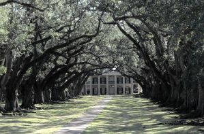 Oak Alley Plantation by SalemCat
