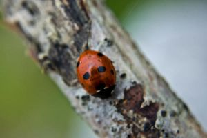 lady bug by speed-demon