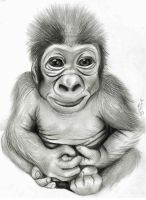 Baby gorilla drawing