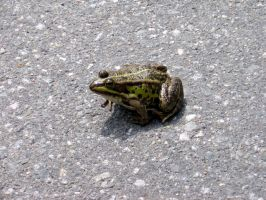 frog by maladie-stock