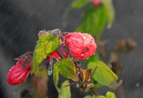Rain Wild Bloom by cprmay