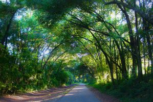 Canopy Trees by AllieCat33
