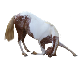 Free Use Horse Pre Cut Stock by purpleswimmergirl2