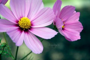 Natural by Jeana-M-Photography