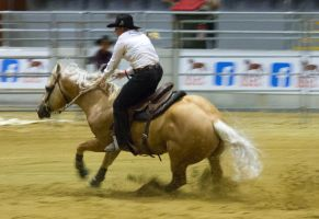 STOCK 2013 Rodeo-256 by fillyrox