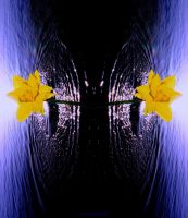 Double Daffy Splash by KeswickPinhead