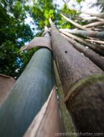 Bamboo to the sky by speedofmyshutter