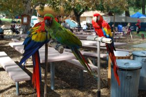 Parrots stock by chamberstock
