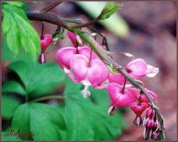 BLEEDING HEARTS by Artographs