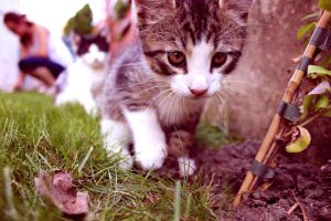 meow:. by iRONiiC