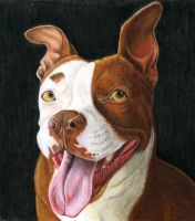 Winnie the Pit Bull by rgyoung