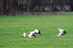 Stork Family by Luna-Caillean