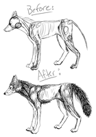 Wolf Sketch Before and After by Gelidwolf1997