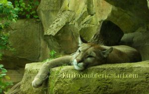 Dozing Cougar by KirikoSoul